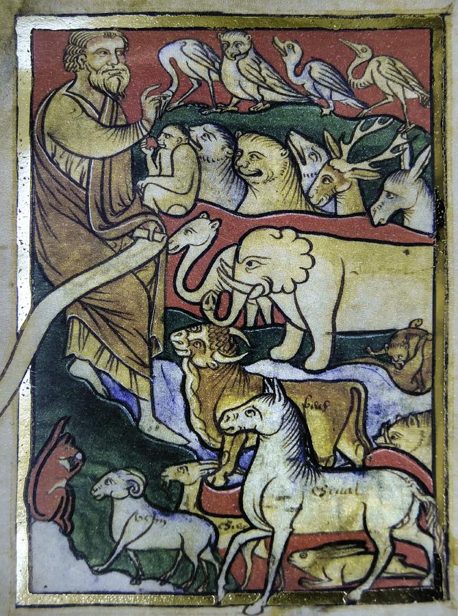 Noe juntando a los animales para introducirlos en el arca antes del diluvio en una ilustracion perteneciente al Bestiario de San Petersburgo